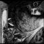 """Mo'ynoq : online il video di """"The Collector"""""""
